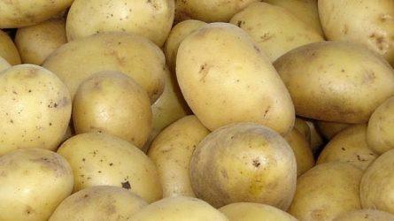 Telített a káposzta piaca, olcsóbb a burgonya - Zöldség-gyümölcs agrárpiaci jelentés