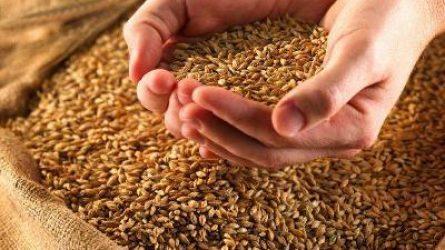 BÉT: Csütörtökön nőtt a búza, a napraforgó és a takarmánykukorica ára