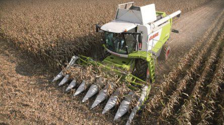 Megkezdődött a kukorica betakarítása - jó termés várható