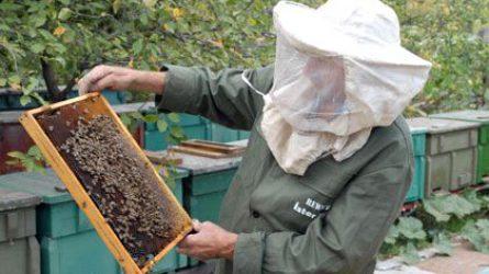 Újabb méhészeti támogatások kifizetését kezdte meg a Kincstár