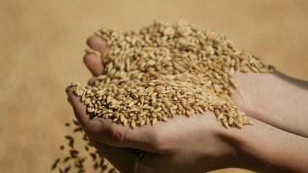 BÉT: Szerdához képest nem változott a termények ára