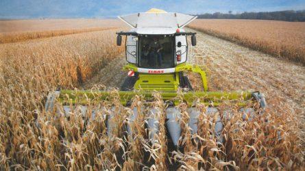 Somogyban a kukorica jelentős részét betakarították már