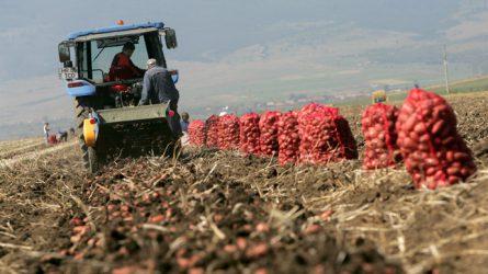 Rekordalacsony a krumpli ára Hargita megyében