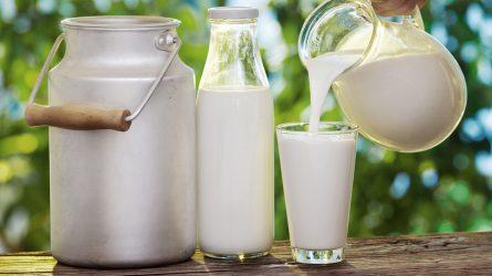 MVH: megkezdődött az idei különleges tejtámogatás végkifizetése