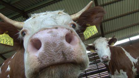 Késni fog az állattartók plusztámogatása