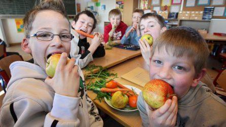 3,4 milliárd forint támogatás az iskolatej-programra, 2,72 milliárd az iskolagyümölcs-programra