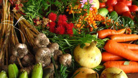 KSH: novemberben 6,8 százalékkal csökkentek a mezőgazdasági termelői árak