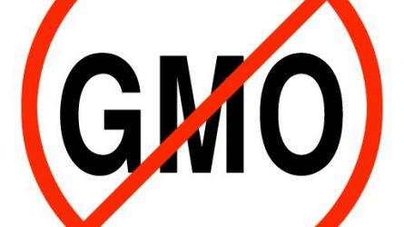 Tavasztól saját hatáskörben tilthatják a GMO-k köztermesztését az uniós országok
