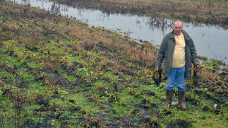 Magyarkanizsán is több területen meghiúsult a betakarítás a sár miatt