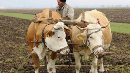 Románia mezőgazdasága számokban