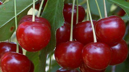 A zöldség-gyümölcs ágazat 160-180 milliárd forintos beruházást igényel