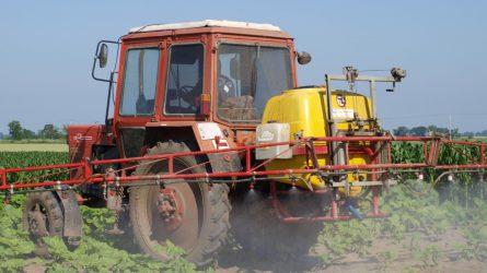 Kukorica gyomirtó szert vontak ki a forgalomból