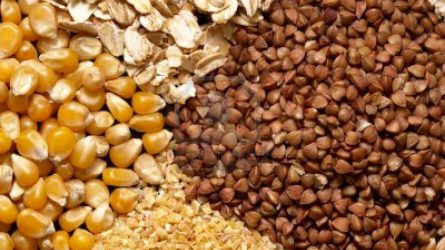 KSH: februárban 8,1 százalékkal csökkentek a mezőgazdasági termelői árak