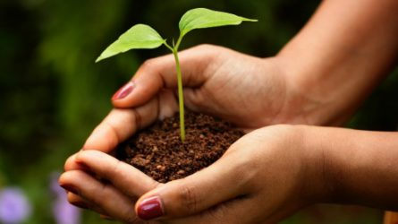 A mezőgazdasági termelés átalakításával megelőzhető Magyarországon a biodiverzitás csökkenése