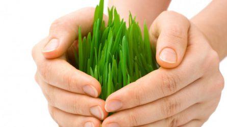 Május végéig kell beadni az agrárbiztosítások támogatására a kérelmet