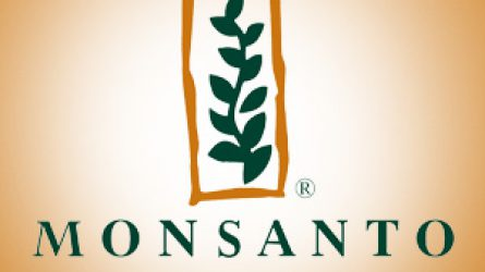 A GVH szerint nem sértett törvényt a Monsanto