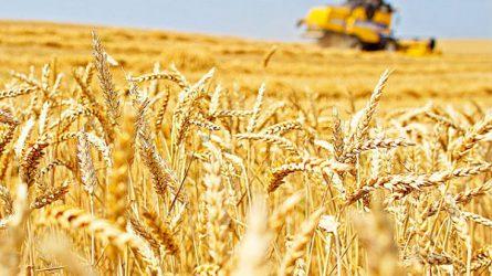 Estek a gabonaárak a Hálaadás napi szünet előtt