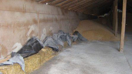 A raktározott termények kártevői elleni védekezésről