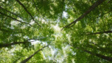 Tájékoztató előadások a NATURA 2000 erdők kezeléséről, a pályázati források lehívásáról