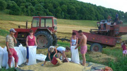 Székelyföld - Megtermeli gabonaszükségletét Maros megye