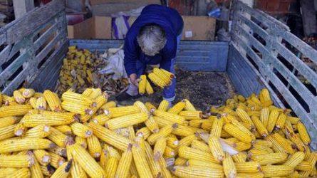 Stabil készletek mellett lejtmenetben az élelmiszerárak