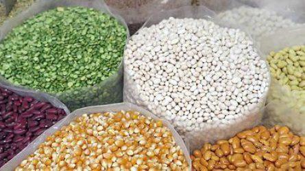A NÉBIH kiemelten ellenőrzi a csemege- és pattogató kukorica vetőmagokat