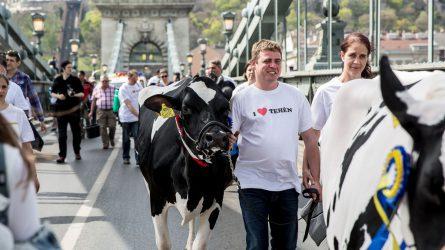 Mintegy félszáz tejtermelő tüntetett hétfőn a fővárosban