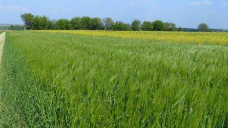 Határszemle - Szárítótüzek megelőzése, terményárak (TERKA információ)