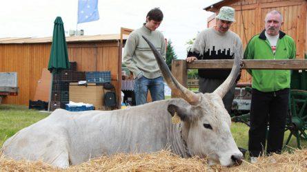 Alföldi Állattenyésztési és Mezőgazda Napok - 2016