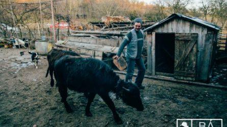 Háromnapos agrárkonferenciát rendeznek augusztusban Székelykeresztúron