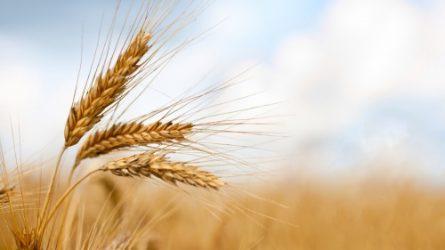 Kedvező terméskilátások a nyár elején