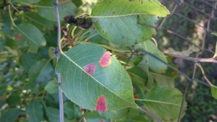 Növényvédelmi előrejelzés: Változékony nyári időjárás – változékony növényvédelmi helyzet