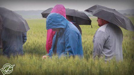 Esős Karintia fajtabemutató Zala megyében - Kalászos Roadshow 2016