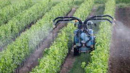 BASF szőlővédelmi előrejelzés - Hol tart most a lisztharmat és a peronoszpóra? (VIDEÓ)