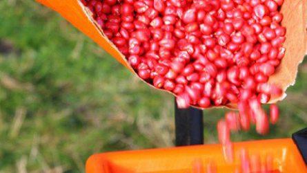 Minőségi őszi kalászost vethetnek a gazdálkodók