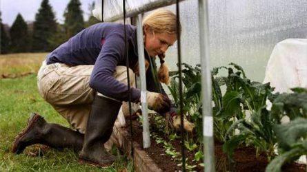 Ingyenes programmal segíti a kamara a fiatal gazdálkodókat