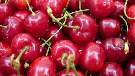 A jó termés ellenére sem lesz olcsóbb a meggy