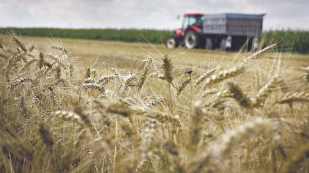 Szerbia Magyarország egyik legfontosabb agrárpartnere lehet