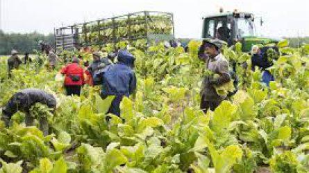 Az agráriumnak is kedvezhet a bérmegállapodás