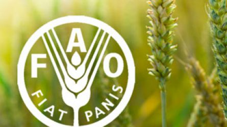 Stagnáló élelmiszerárak mellett rekordszintre dagadnak a gabonatartalékok