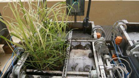 Az energianád (Miscanthus spp.) alkalmazási lehetősége alternatív termőhelyeken