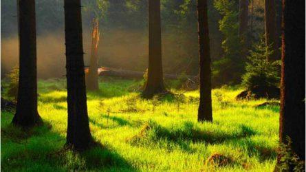 Pályázati támogatás az erdők környezetvédelmére