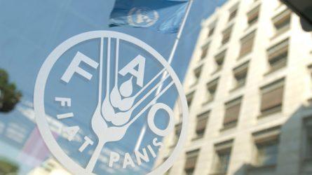 FAO: Öt éve lefelé mennek az alapvető élelmiszerárak