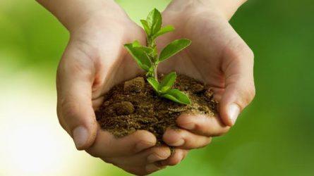 A kimerülő mezőgazdasági talajok művelési technológiáját megújító talajerőpótló gazdálkodás, mint fenntartható növénytermesztési módszer