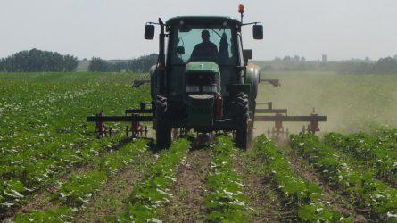 A talajművelés kártevőkre gyakorolt hatásainak elemzése