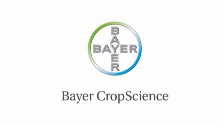 Bayer készítmények a gazdaságos gabonatermesztésért