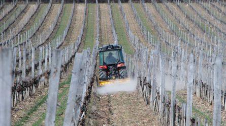 A gépek mellett komplex technológiát is nyújt a Güttler Kft. a szőlőültetvényekben