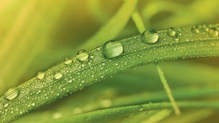 Fenoxiherbicidek a növényvédelemben