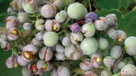 Szőlészek-borászok profi választása: Kwizda szőlőtechnológia 2017