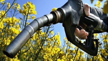 A mezőgazdasági termékek feldolgozottsági szintjének növelése a cél